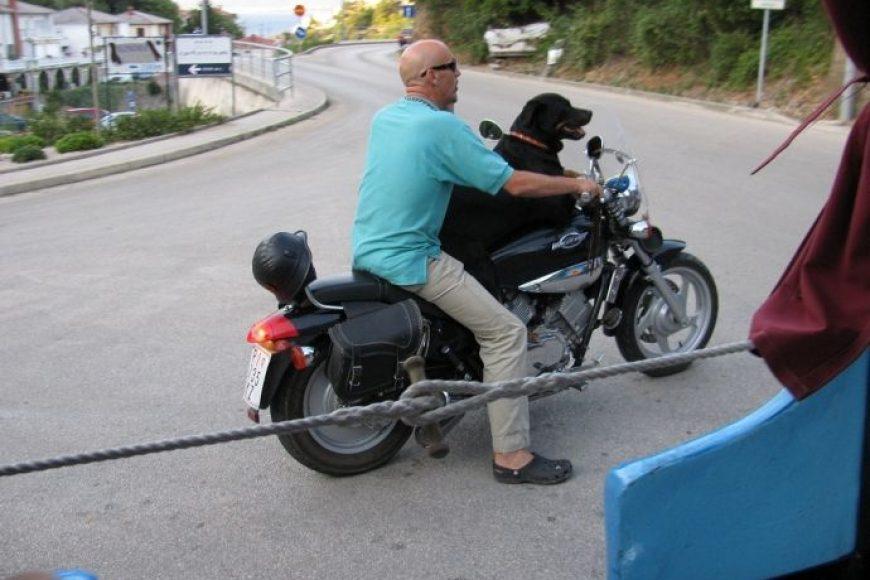 (Uz motor) pas je čovjekov najbolji prijatelj